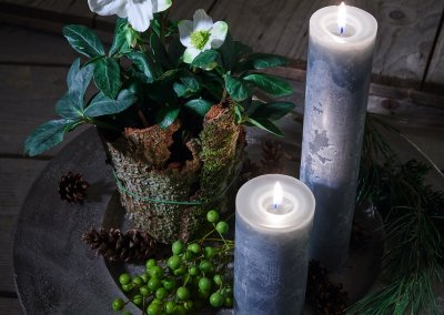 Advent Teller mit Christrose