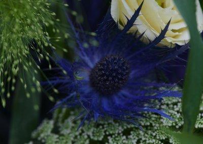 Blau Weiss Rosen Mit Disteln