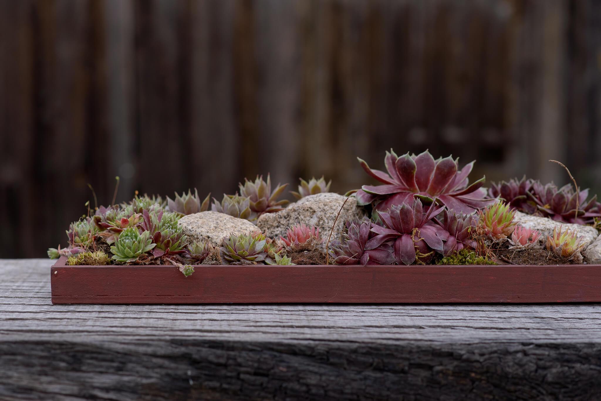 Blumendeko Hauswurz