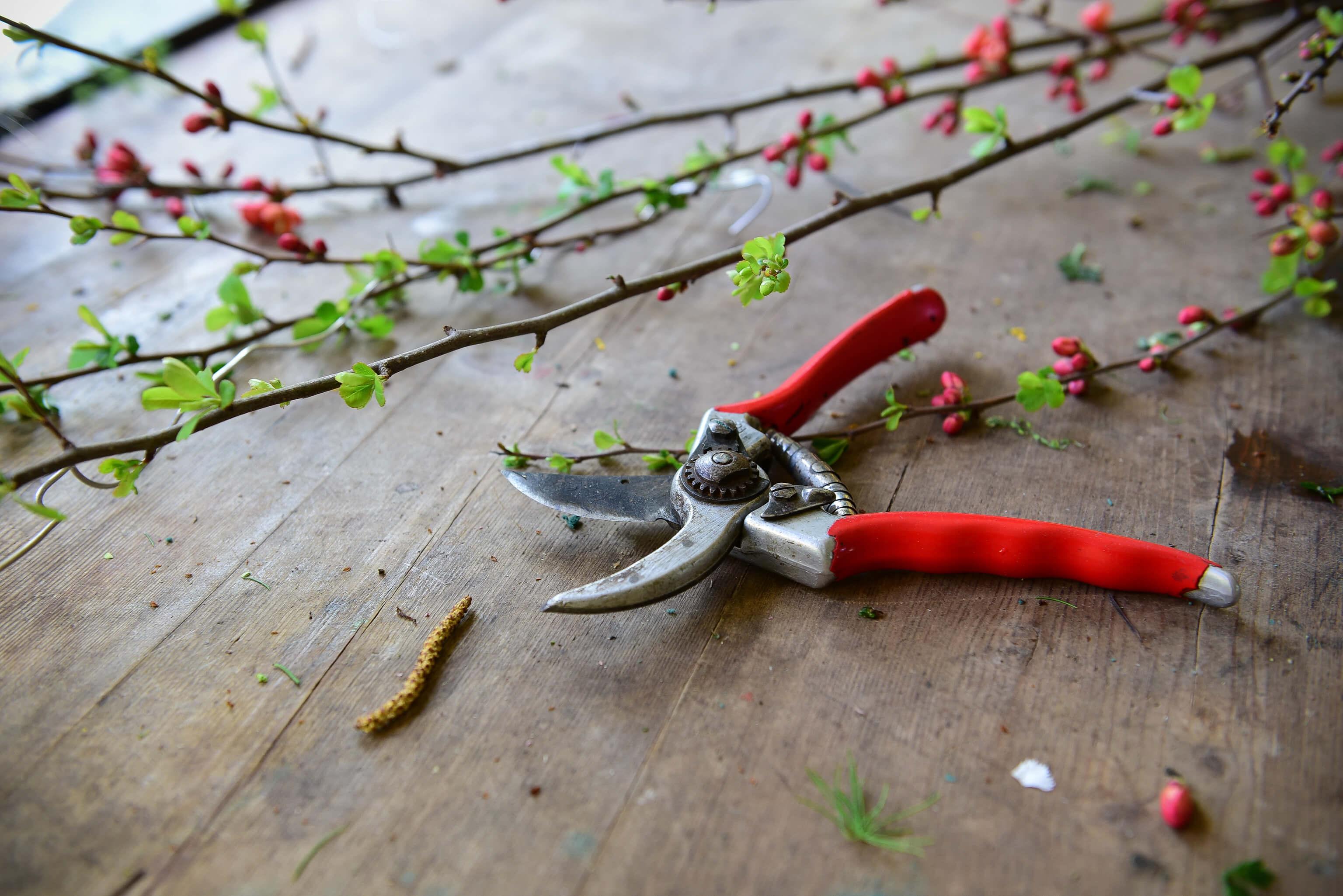 Gaertner Und Floristen Am Werk