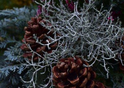 Zapfen und Zweige - Winterstimmung